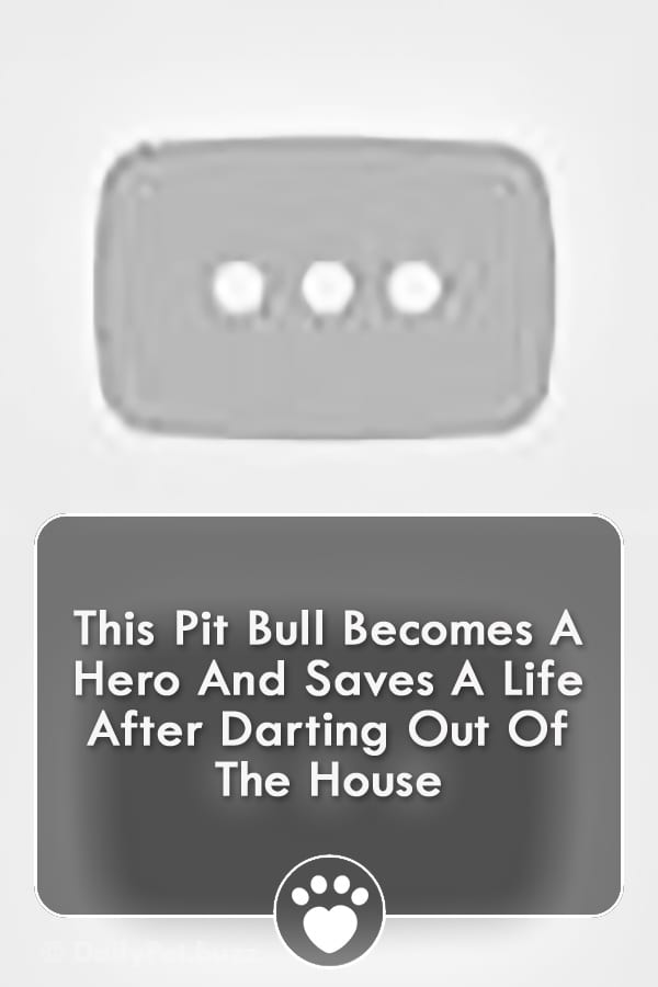 This Pit Bull Becomes A Hero And Saves A Life After Darting Out Of The House