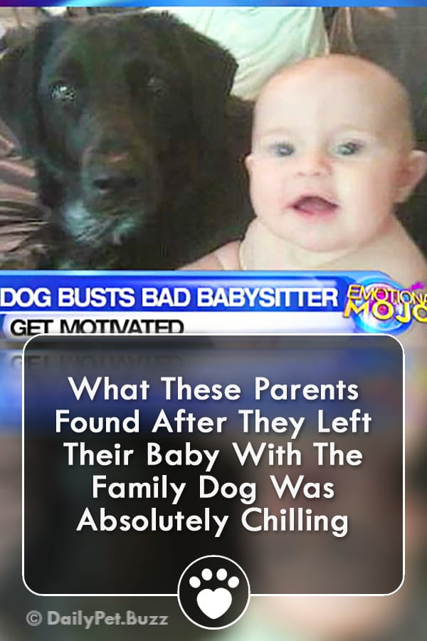 What These Parents Found After They Left Their Baby With The Family Dog Was Absolutely Chilling