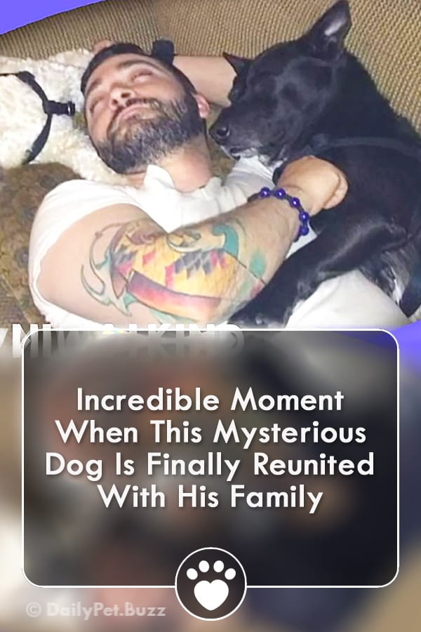 Incredible Moment When This Mysterious Dog Is Finally Reunited With His Family