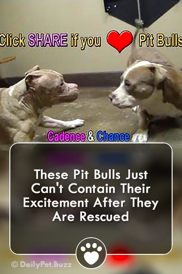 These Pit Bulls Just Can\'t Contain Their Excitement After They Are Rescued