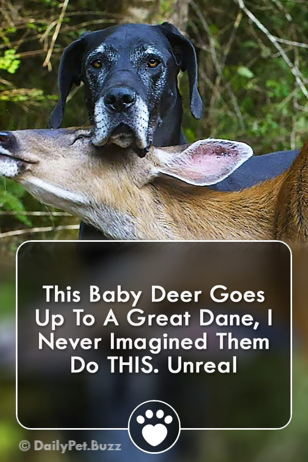 This Baby Deer Goes Up To A Great Dane, I Never Imagined Them Do THIS. Unreal