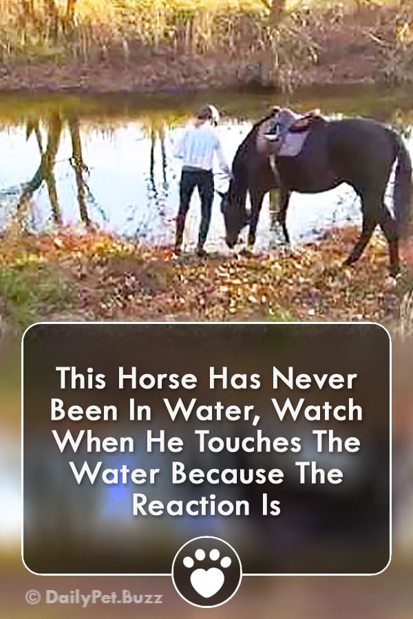 This Horse Has Never Been In Water, Watch When He Touches The Water Because The Reaction Is