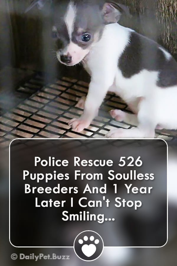 Police Rescue 526 Puppies From Soulless Breeders And 1 Year Later I Can\'t Stop Smiling...