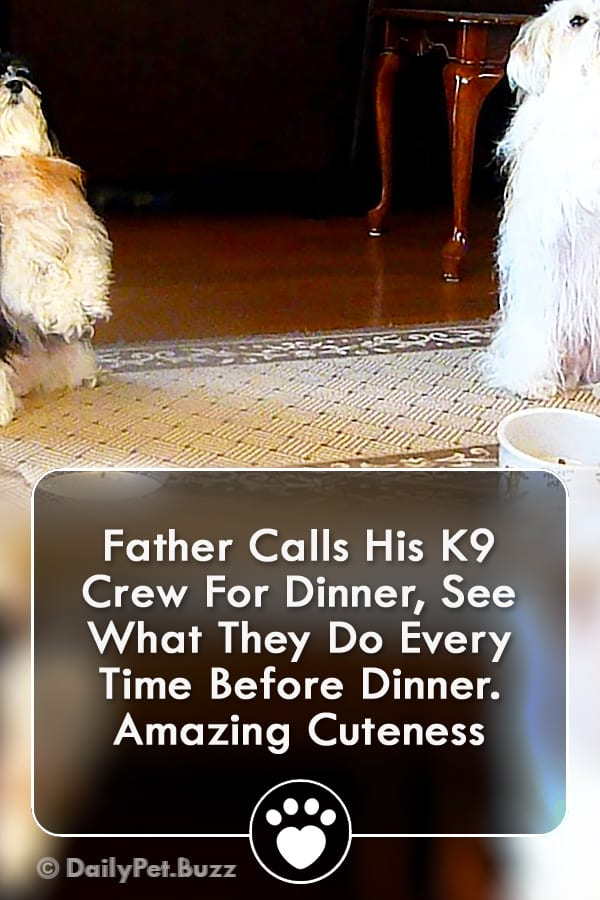 Father Calls His K9 Crew For Dinner, See What They Do Every Time Before Dinner. Amazing Cuteness