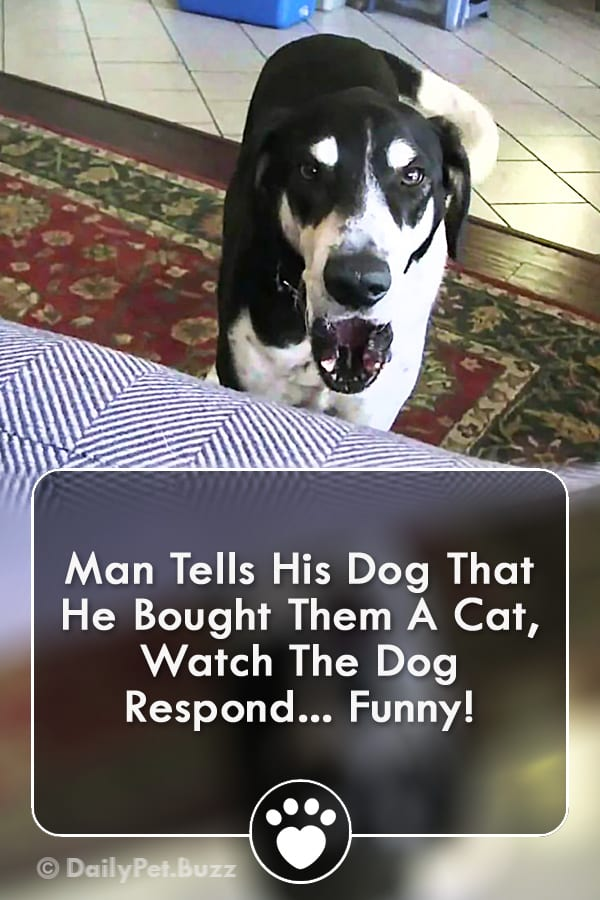 Man Tells His Dog That He Bought Them A Cat, Watch The Dog Respond... Funny!