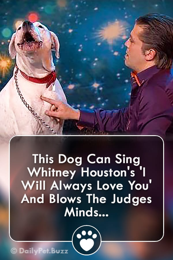 This Dog Can Sing Whitney Houston\'s \'I Will Always Love You\' And Blows The Judges Minds...