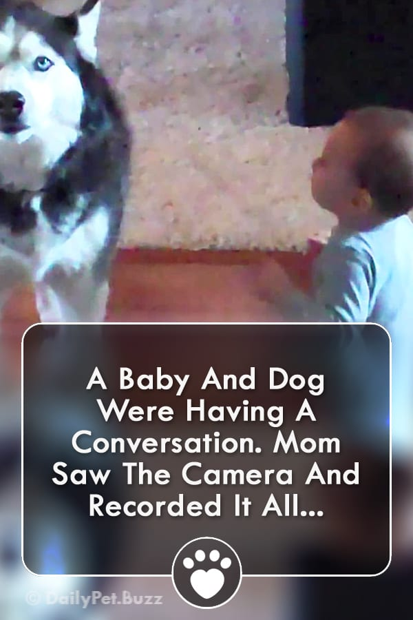A Baby And Dog Were Having A Conversation. Mom Saw The Camera And Recorded It All...