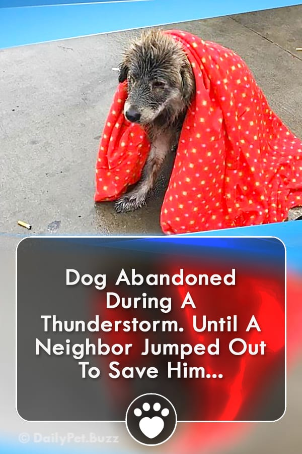 Dog Abandoned During A Thunderstorm. Until A Neighbor Jumped Out To Save Him...