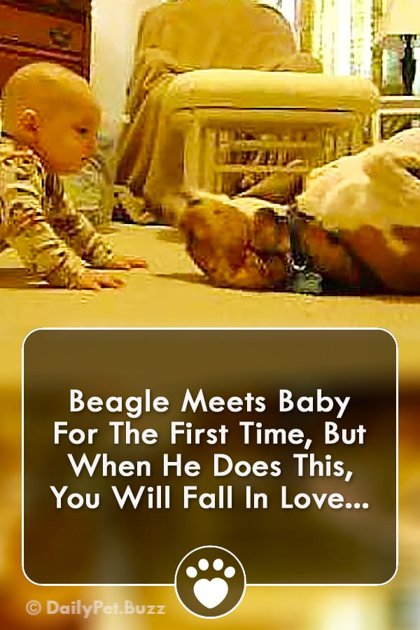 Beagle Meets Baby For The First Time, But When He Does This, You Will Fall In Love...