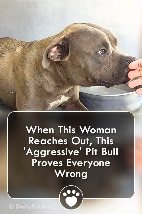 When This Woman Reaches Out, This \'Aggressive\' Pit Bull Proves Everyone Wrong