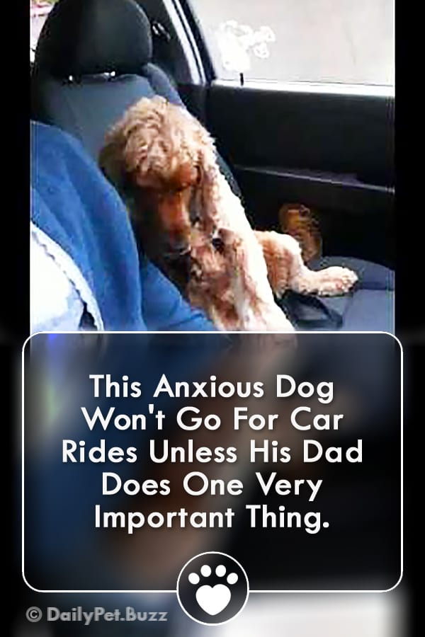 This Anxious Dog Won\'t Go For Car Rides Unless His Dad Does One Very Important Thing.