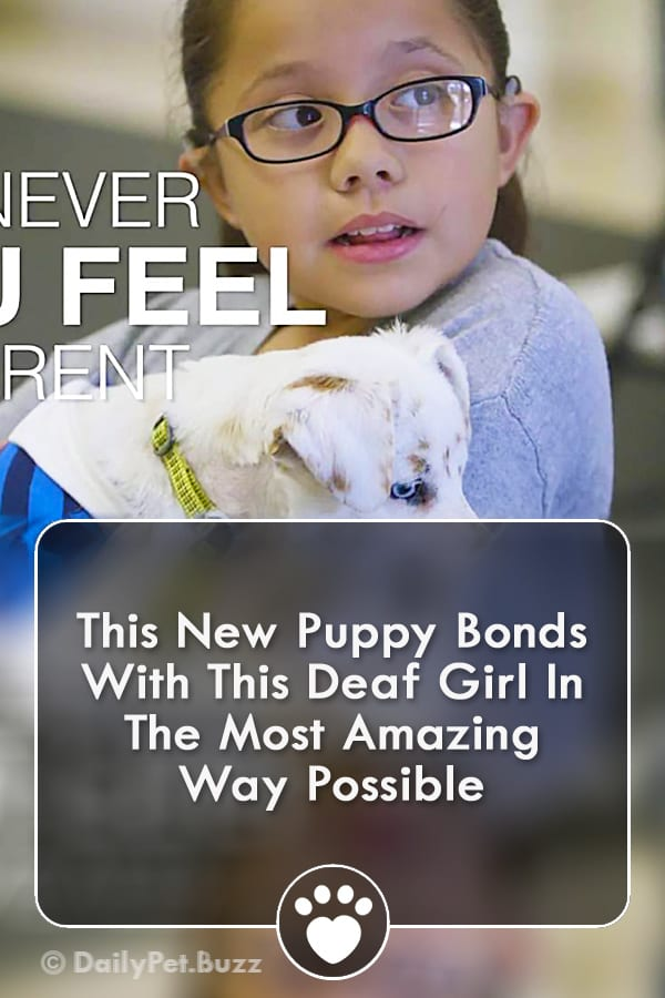 This New Puppy Bonds With This Deaf Girl In The Most Amazing Way Possible