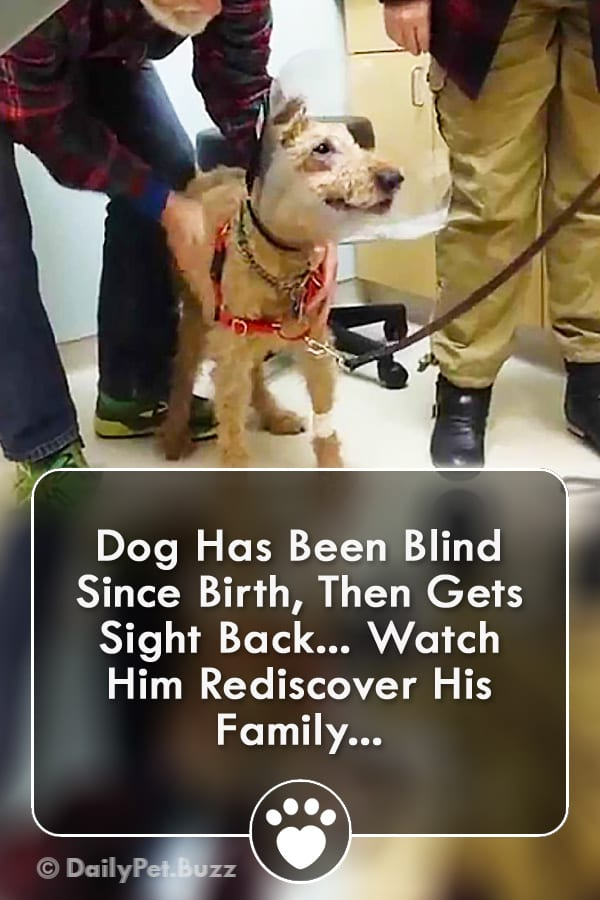 Dog Has Been Blind Since Birth, Then Gets Sight Back... Watch Him Rediscover His Family...