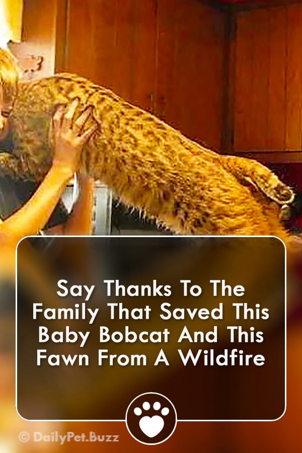 Say Thanks To The Family That Saved This Baby Bobcat And This Fawn From A Wildfire