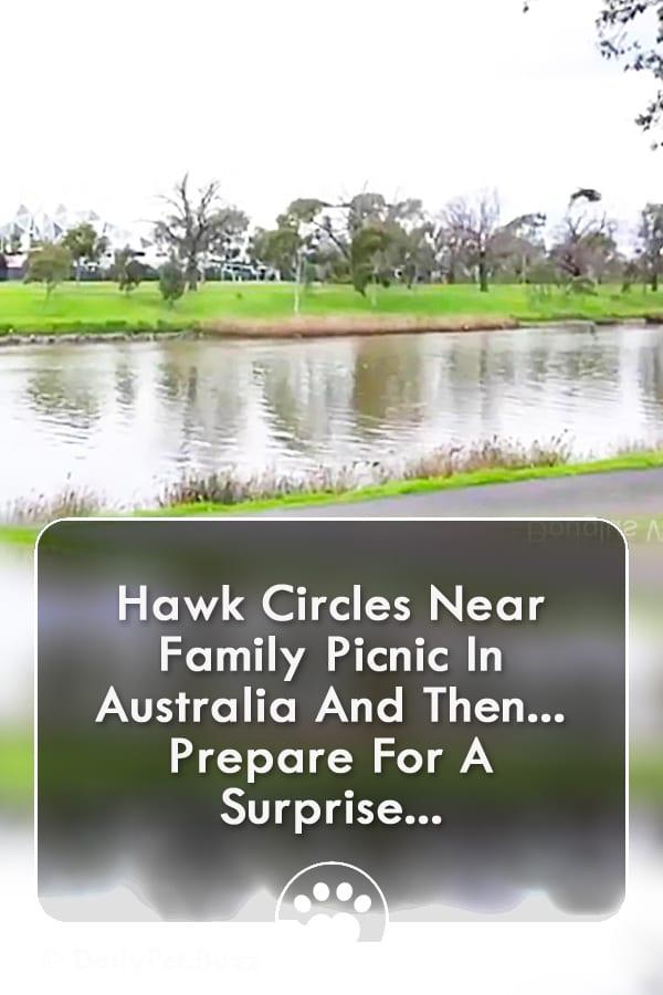 Hawk Circles Near Family Picnic In Australia And Then... Prepare For A Surprise...