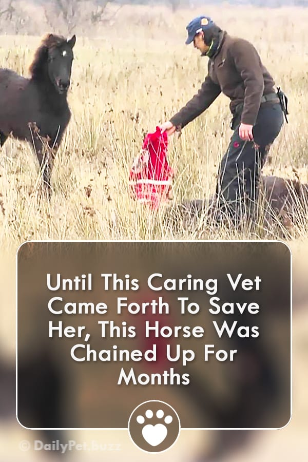Until This Caring Vet Came Forth To Save Her, This Horse Was Chained Up For Months