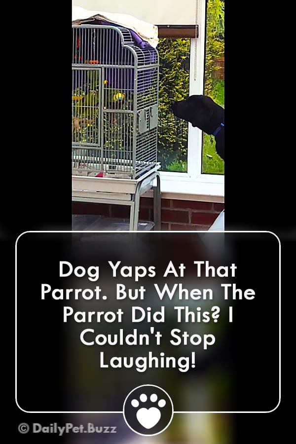 Dog Yaps At That Parrot. But When The Parrot Did This? I Couldn\'t Stop Laughing!
