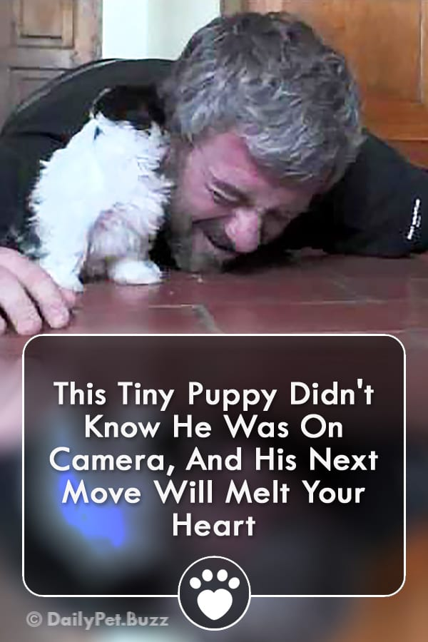 This Tiny Puppy Didn\'t Know He Was On Camera, And His Next Move Will Melt Your Heart