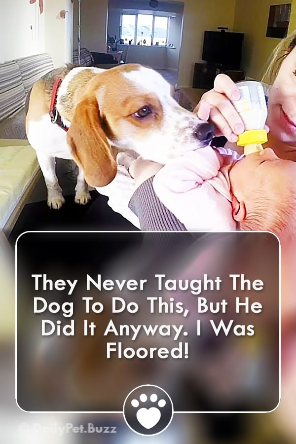 They Never Taught The Dog To Do This, But He Did It Anyway. I Was Floored!