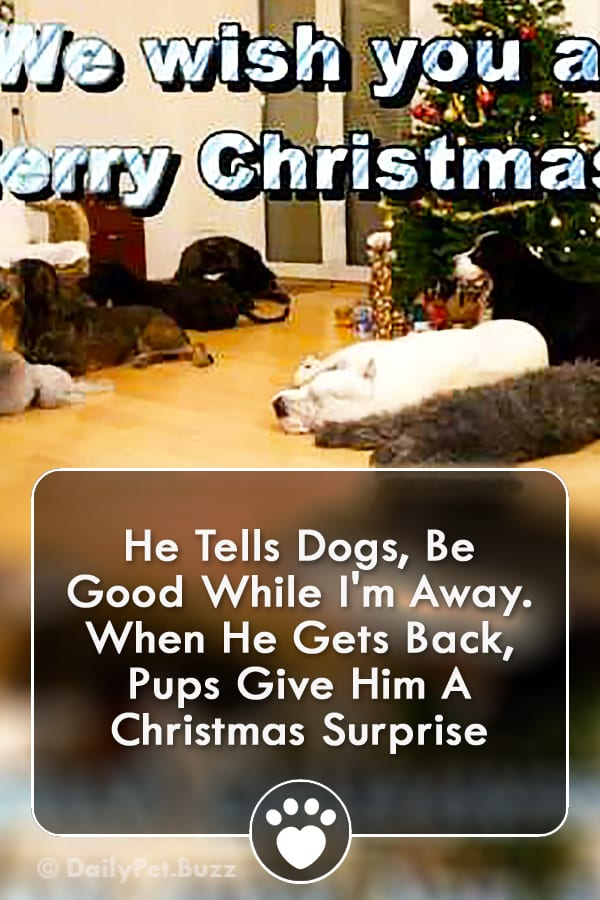 He Tells Dogs, Be Good While I\'m Away. When He Gets Back, Pups Give Him A Christmas Surprise