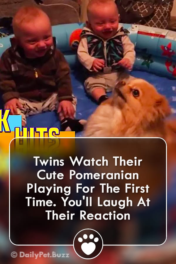 Twins Watch Their Cute Pomeranian Playing For The First Time. You\'ll Laugh At Their Reaction