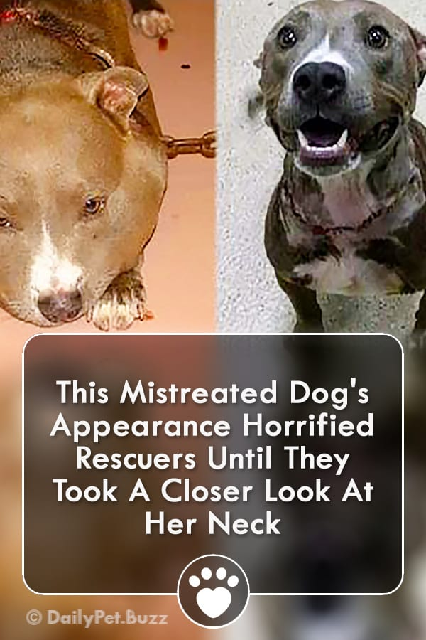 This Mistreated Dog\'s Appearance Horrified Rescuers Until They Took A Closer Look At Her Neck