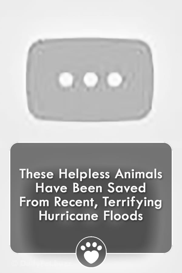 These Helpless Animals Have Been Saved From Recent, Terrifying Hurricane Floods