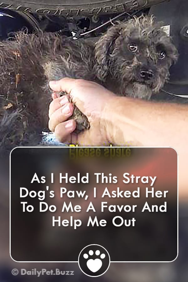 As I Held This Stray Dog\'s Paw, I Asked Her To Do Me A Favor And Help Me Out