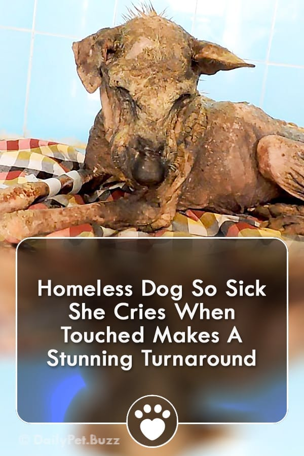 Homeless Dog So Sick She Cries When Touched Makes A Stunning Turnaround
