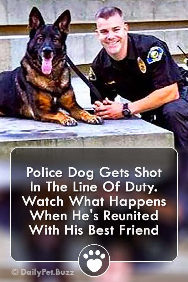 Police Dog Gets Shot In The Line Of Duty. Watch What Happens When He\'s Reunited With His Best Friend