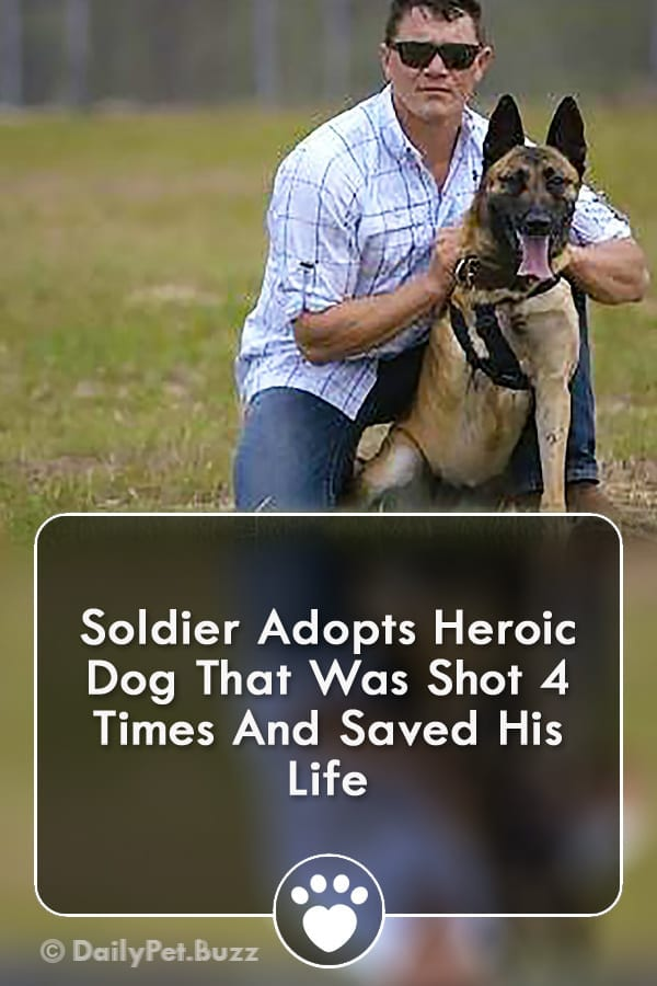 Soldier Adopts Heroic Dog That Was Shot 4 Times And Saved His Life