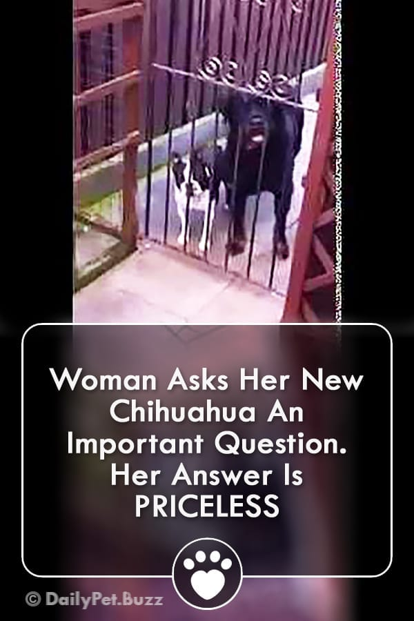 Woman Asks Her New Chihuahua An Important Question. Her Answer Is PRICELESS