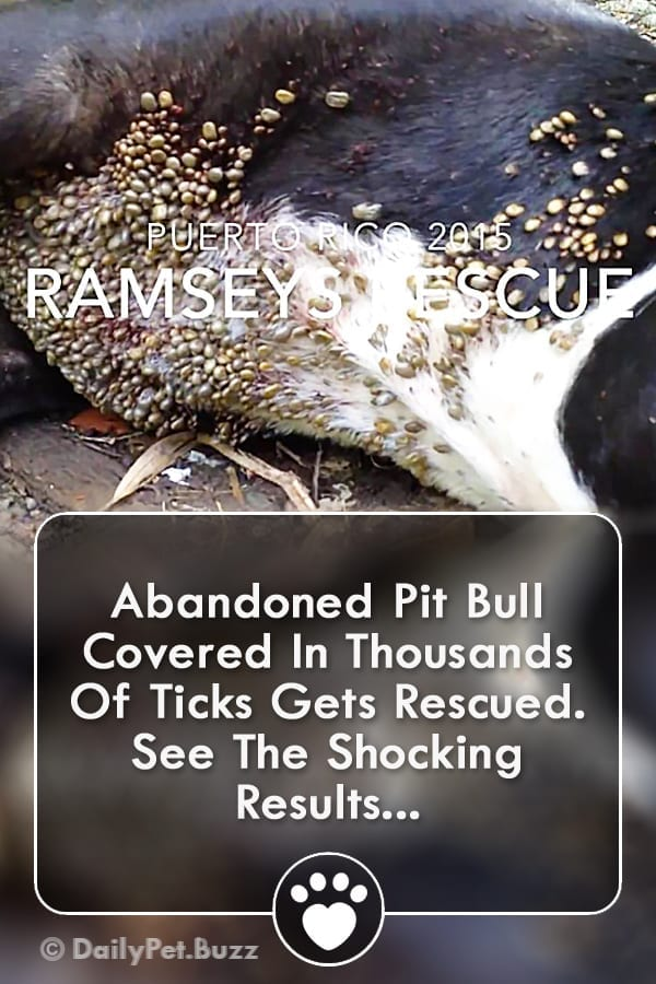 Abandoned Pit Bull Covered In Thousands Of Ticks Gets Rescued. See The Shocking Results...