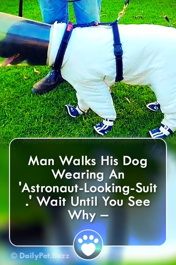 Man Walks His Dog Wearing An \'Astronaut-Looking-Suit.\' Wait Until You See Why –