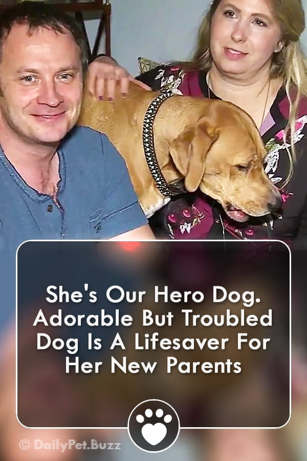 She\'s Our Hero Dog. Adorable But Troubled Dog Is A Lifesaver For Her New Parents