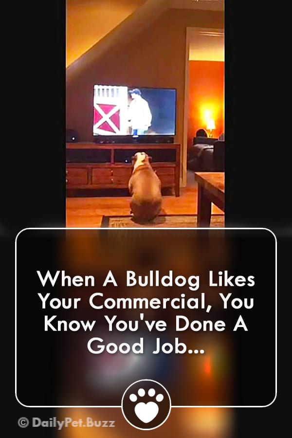 When A Bulldog Likes Your Commercial, You Know You\'ve Done A Good Job...