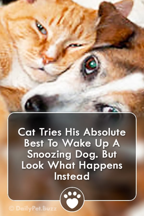 Cat Tries His Absolute Best To Wake Up A Snoozing Dog. But Look What Happens Instead