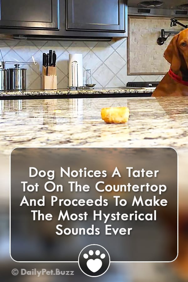 Dog Notices A Tater Tot On The Countertop And Proceeds To Make The Most Hysterical Sounds Ever