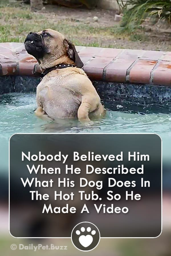 Nobody Believed Him When He Described What His Dog Does In The Hot Tub. So He Made A Video