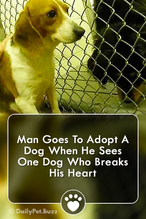 Man Goes To Adopt A Dog When He Sees One Dog Who Breaks His Heart