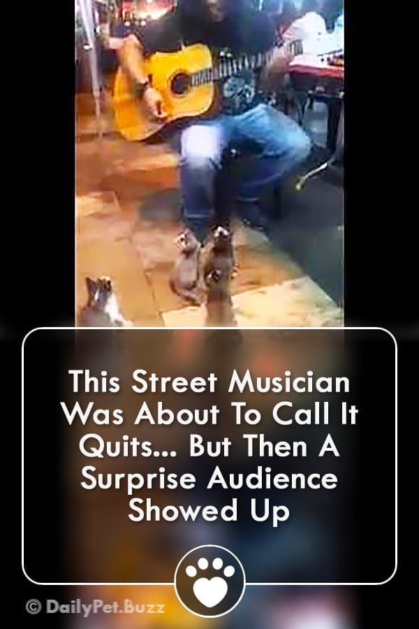 This Street Musician Was About To Call It Quits... But Then A Surprise Audience Showed Up