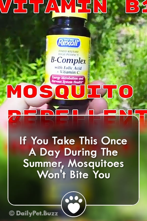 If You Take This Once A Day During The Summer, Mosquitoes Won\'t Bite You