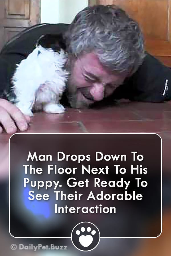 Man Drops Down To The Floor Next To His Puppy. Get Ready To See Their Adorable Interaction