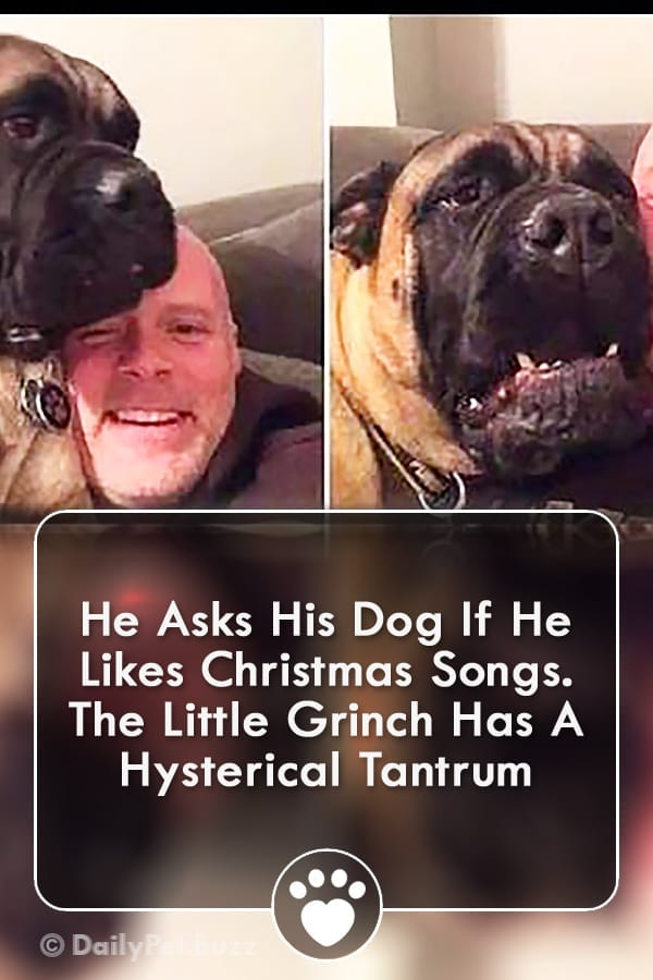 He Asks His Dog If He Likes Christmas Songs. The Little Grinch Has A Hysterical Tantrum