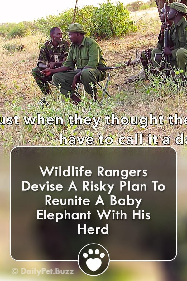 Wildlife Rangers Devise A Risky Plan To Reunite A Baby Elephant With His Herd