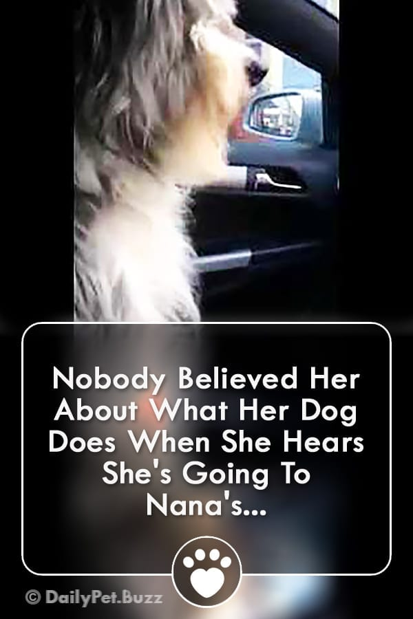 Nobody Believed Her About What Her Dog Does When She Hears She\'s Going To Nana\'s...