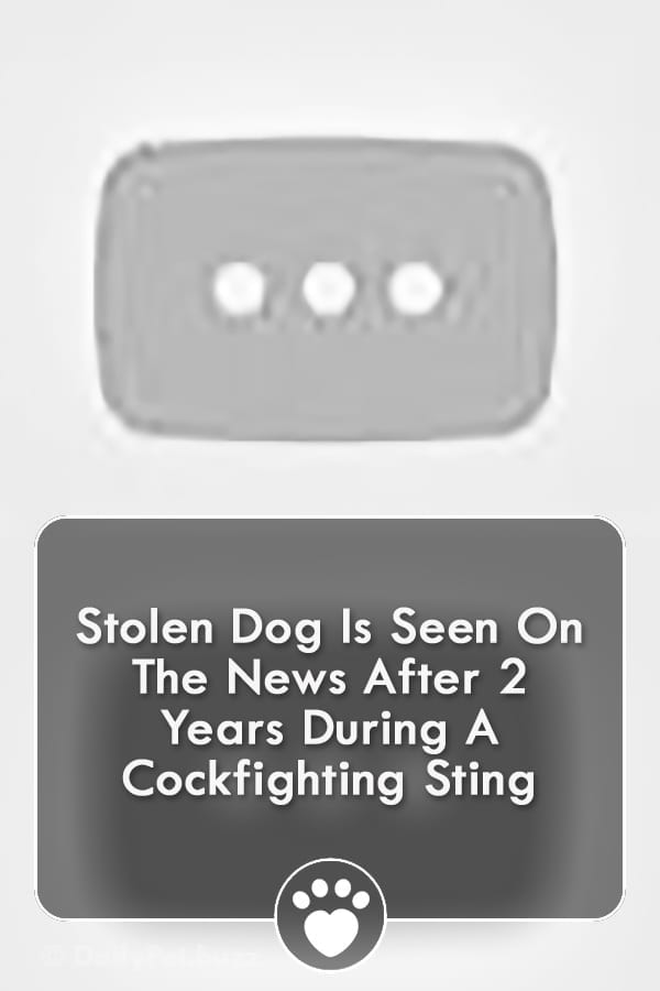 Stolen Dog Is Seen On The News After 2 Years During A Cockfighting Sting