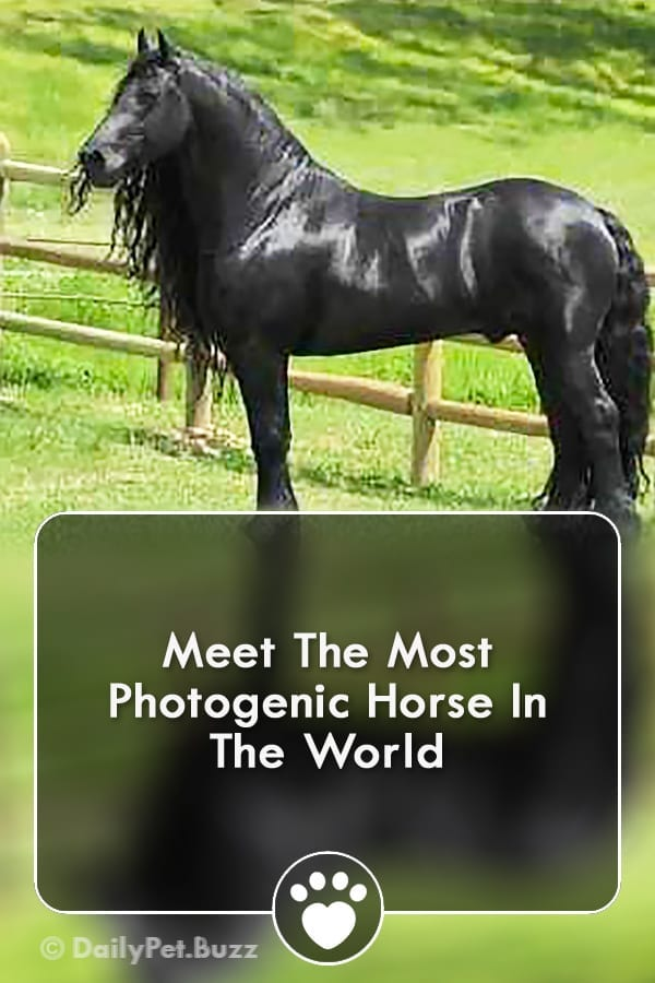 Meet The Most Photogenic Horse In The World