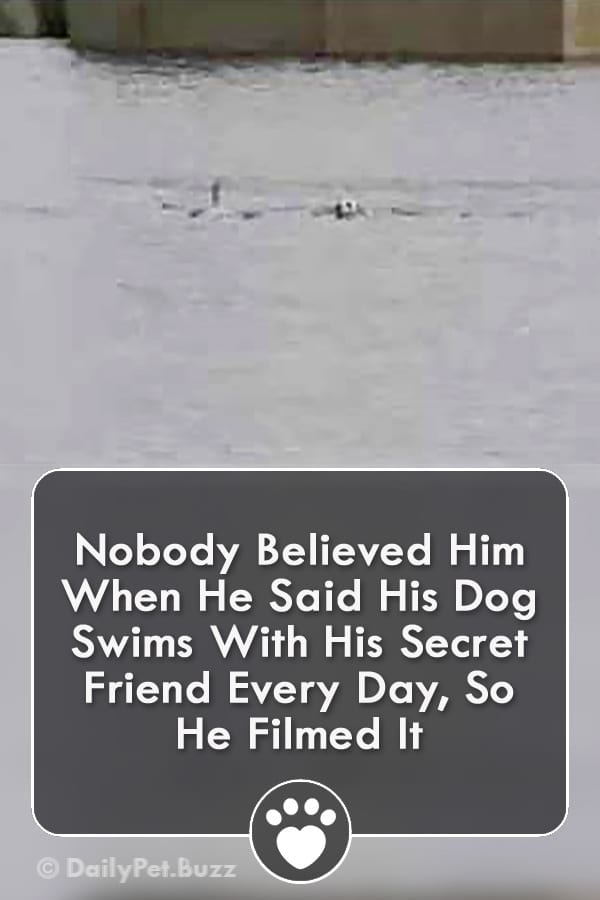 Nobody Believed Him When He Said His Dog Swims With His Secret Friend Every Day, So He Filmed It