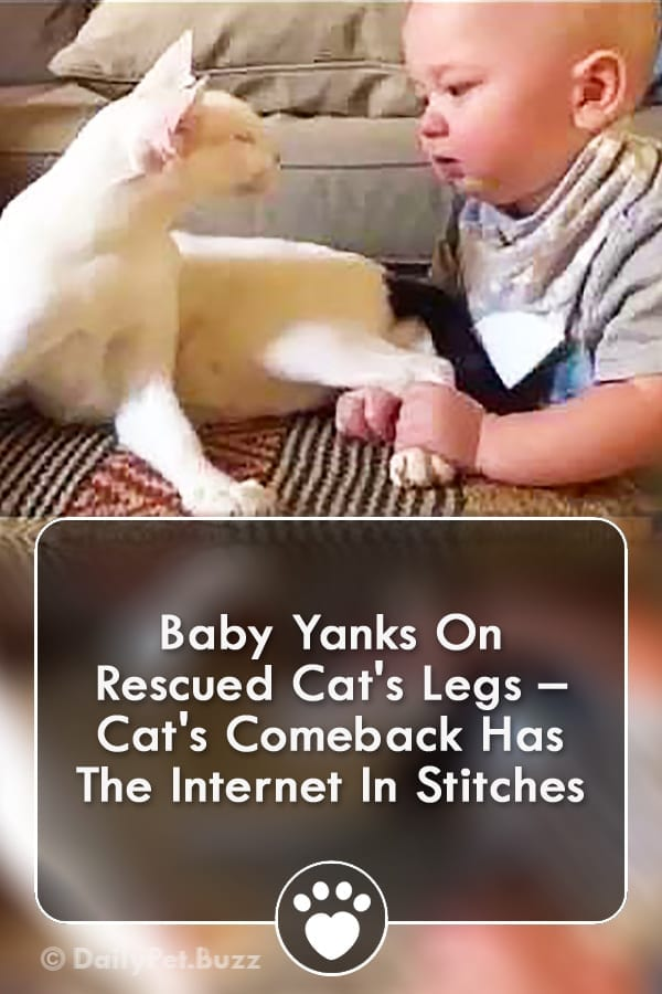Baby Yanks On Rescued Cat\'s Legs – Cat\'s Comeback Has The Internet In Stitches